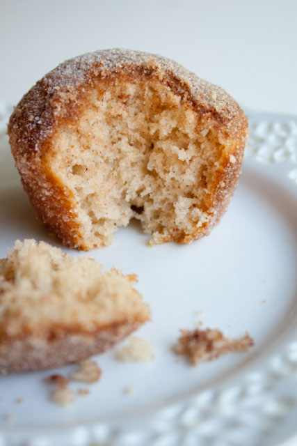 Cinnamon Sugar Crusted Coffee Cake Muffins! 220 per muffin and they taste JUST like an old fashioned donut rolled in cinnamon sugar!