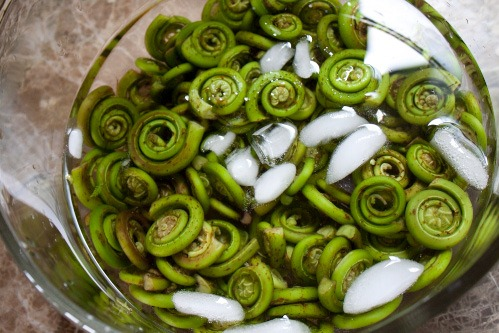 Pickled Fiddlehead Ferns