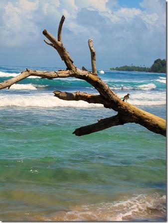 punta uva beach 017_edited-1