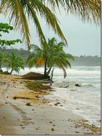 playa_paunch2