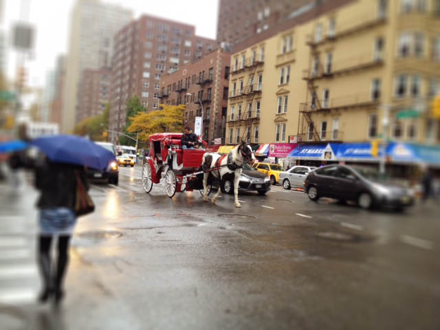 horse and carriage in new york city
